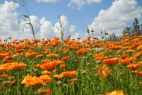 promocja wiosenna Orange